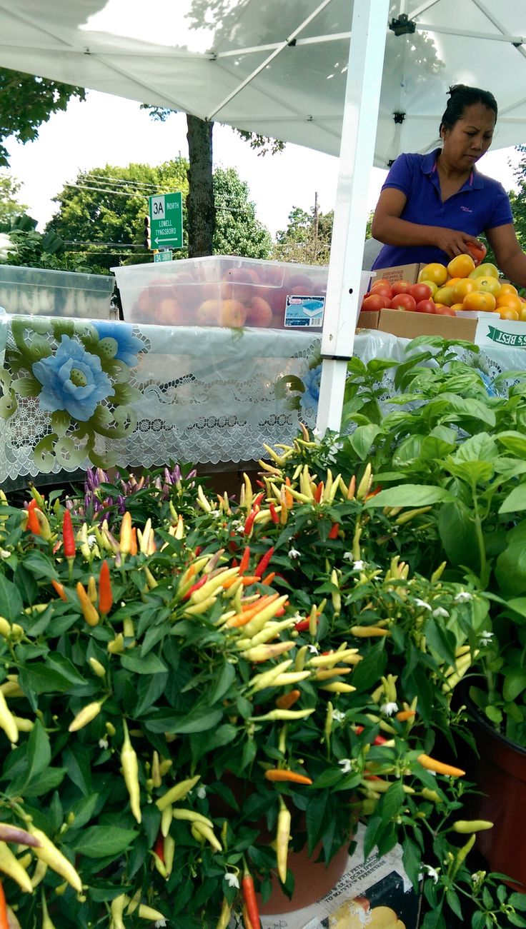 42 best plants and fish ponics images on pinterest hydroponics