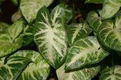 House Plants Encyclopedia A-Z