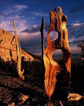 Great Basin National Park, Nevada. Photo by Richard Olsenius