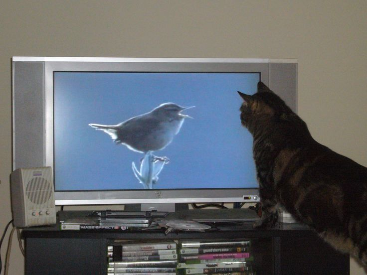One day, one day I'll get that bird.