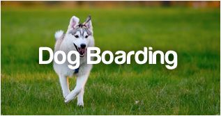 http://www.petstayadvisor.com.au/article/Dog-boarding-Social-fun-if-you-choose-the-right-facility
