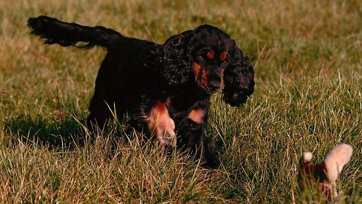 Das Fell des Hundes ist ein Spiegel seines Allgemeinzustandes. Für alle Typen, ob kurz, lang, borstig oder flauschig, ist die richtige Pflege erforderlich.