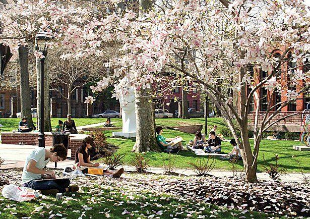 """My school campus :-). Pratt Institute."" - Aja Paulazzo    http://pinterest.com/pin/33636328437237043/"