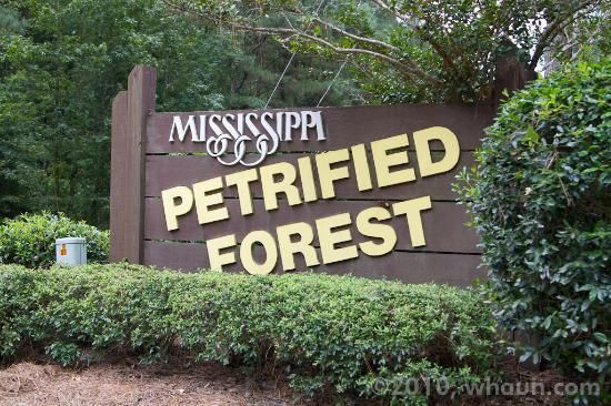 Photo of Mississippi Petrified Forest