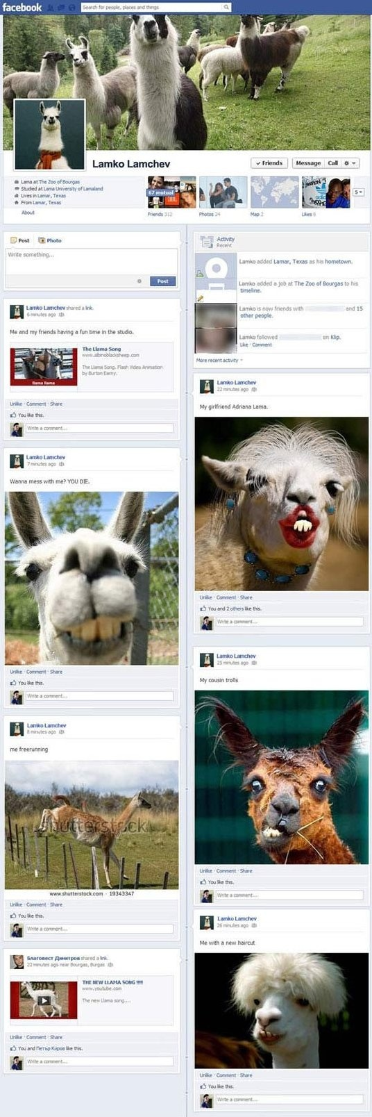 Funny Pictures - llamas on Facebook - www.funny-pictures-blog.com