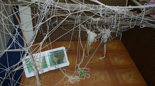 Spider web in a Reggio Classroom