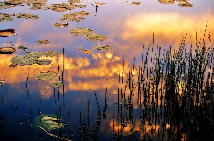 """Reeds And Lily Pads In The Clouds  by Michael Aguirre on Capture Minnesota // Allemansratt Wilderness Park- Allemansratt -or- """"Every Man's Rights"""", is the Swedish word for freedom to roam, a Nordic tradition that permits everyone to walk, ski, or snow shoe freely where this does not harm the natural environment."""