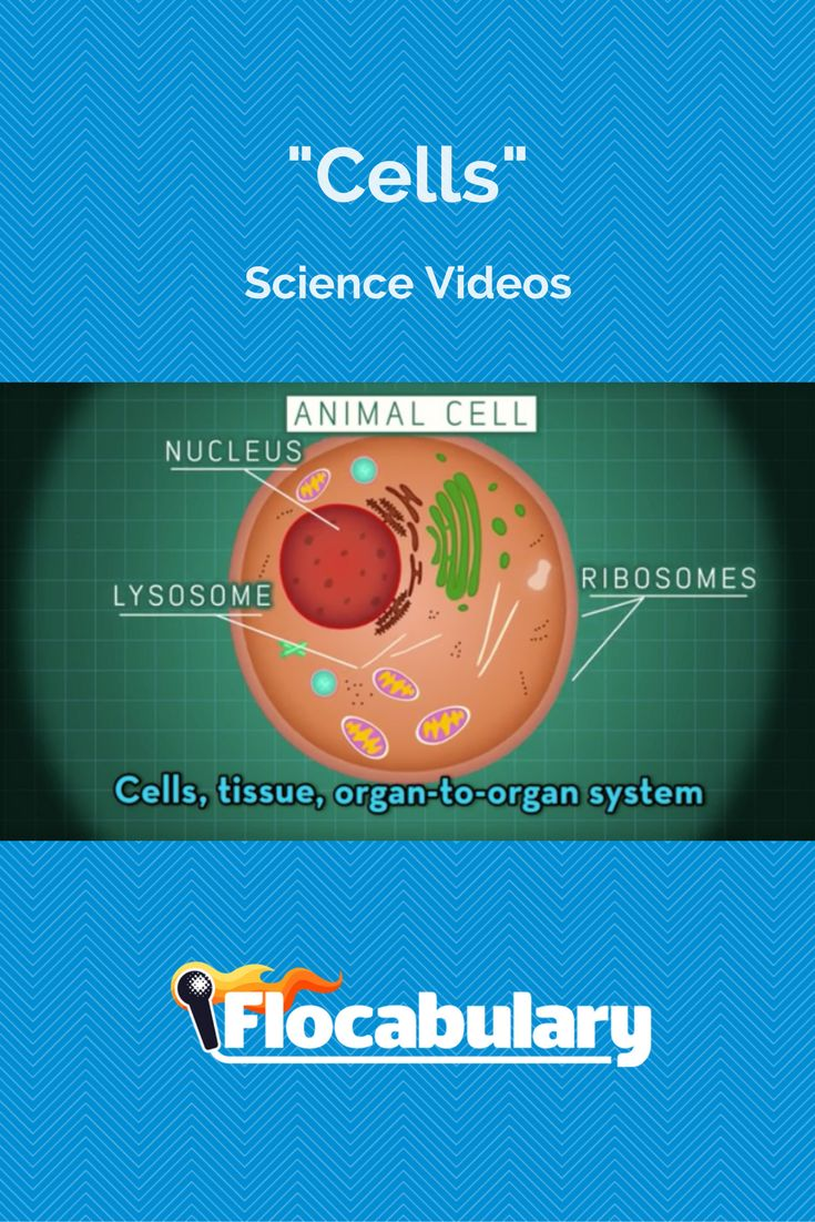 92 best Science Videos images on Pinterest