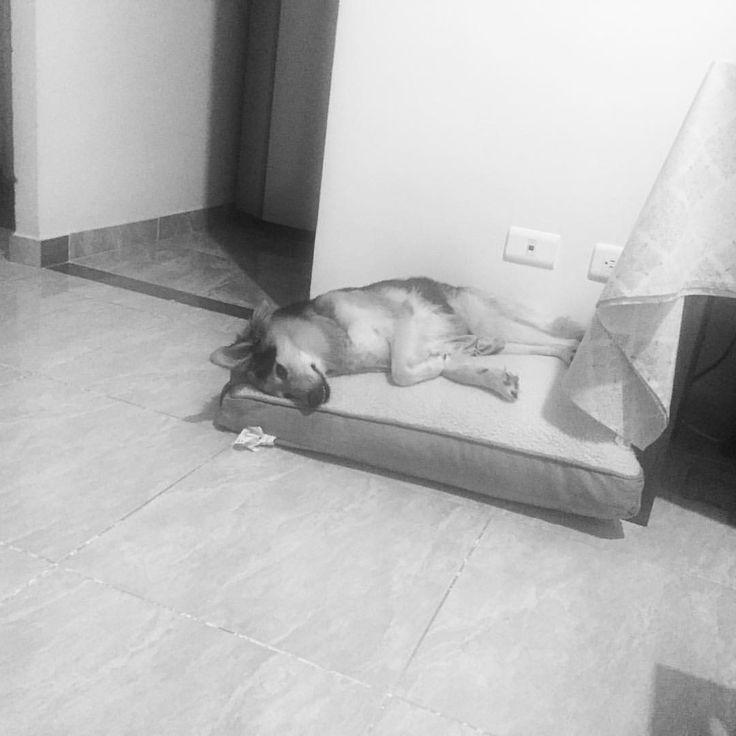 El dormir de una mascota