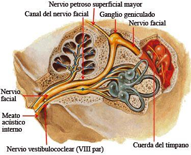 Fig. 6.44. Trayecto del nervio facial en la porción petrosa del hueso temporal