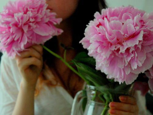 PeoniesPink Flower