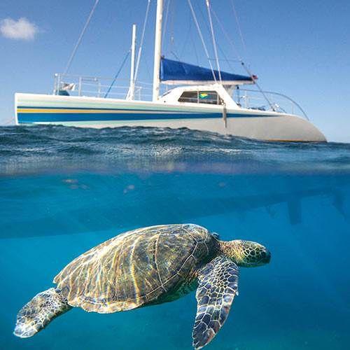 Dolphins, turtles, hidden valleys and razor sharp peeks of the Napali Coast. Adventure aboard the 50 foot sailing catamaran Leila on a 5 hour snorkel tour.