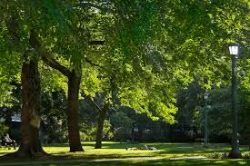Image result for toronto parks