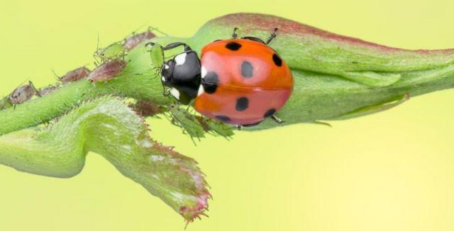 <p>Podomácku vyrobený bio postřik je k rostlinám rozhodně šetrnější. Návodů, jak se mšich…