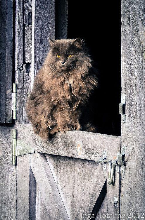 13 Best Robert S Cowboy Shoot Images On Pinterest Hot