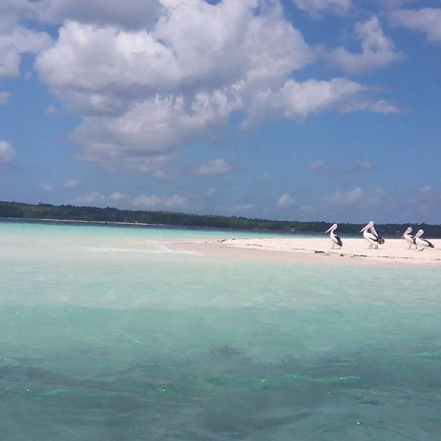 PULAU OHOIEW DESA NGILNGOF  Pulau Ohoiew adalah sebuah pulau karang kecil yang berada di depan desa Ngilngof dan termasuk 1 dari sepuluh pulau yang berada di pantai barat laut Kei Kecil. Pulau-pulau lainnya adalah Ohoiwa, Ohoitir, Nukahai, Nai, Hoat, Lea, Amut, Nuhura, Tangwain.  Pulau ini dulunya menjadi tempat tinggal manusia, seperti namanya mengindikasikannya: Ohoi berarti kampung atau desa dan Ew tidak jelas artinya, namun sudah ditinggalkan beberapa ratus tahun lalu. Konon, dulu ada…