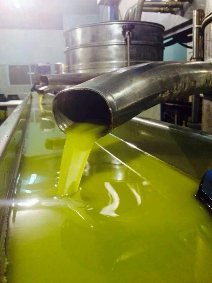 Beautiful Palestinian Olive Oil