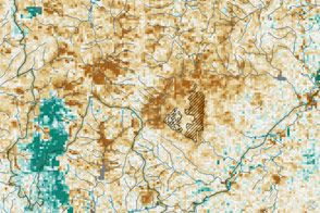 Sap-sucking Bugs Threaten Hemlock Forests