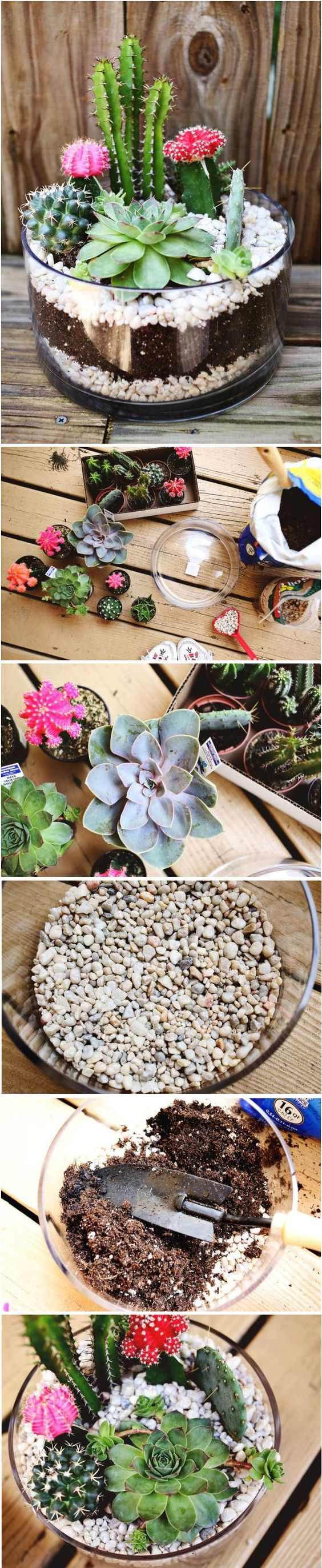 The 25 best Cacti garden ideas on Pinterest Outdoor cactus