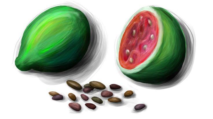 Diese Studie charakterisiert die chemische Zusammensetzung, das Fettsäureprofil und die bioaktiven Verbindungen in den Guavensamen.  #Guava #Guaven #Samen #Öl