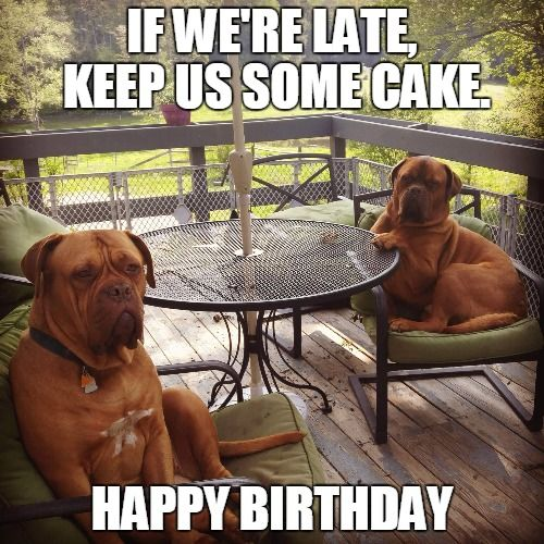 Birthdays Are Hilarious Happy Birthday Jokes Funny Party: Funny Birthday Meme With Dogs Taking It Easy.