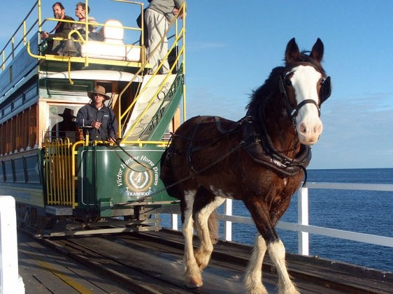 Granite Island South Australia  Horse-Drawn Tram a good day out at Victor Harbor and Granite Island good for the kiddies