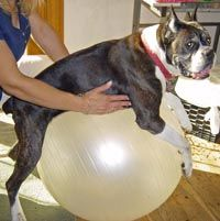 23 Best Images About Dog Spinal Cord Stroke Fce