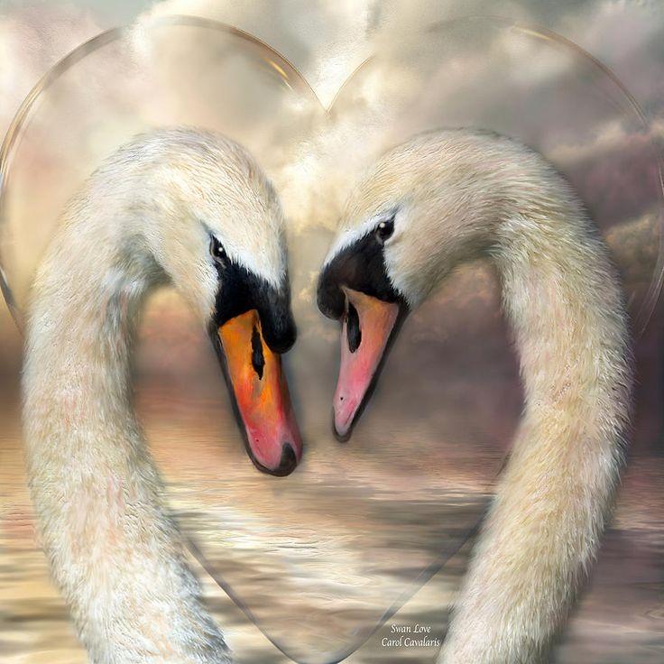 Swan Love Mixed Media  - Swan Love Fine Art Print