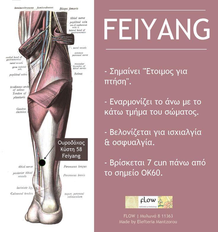 """Το Feiyang (ΟΚ58) είναι ένα ιδιαίτερο βελονιστικό σημείο, αφού εναρμονίζει το άνω με το κάτω μέρος του σώματος  Θα μάθουμε να το δουλεύουμε μαζί με όλα τα υπόλοιπα στην εκπαίδευση του Ηλεκτροβελονισμού ➡️jointheflow.weebly.com/ilektrovelonismos.html Σημαίνει """"Ετοιμασία για Πτήση"""", κι ελπίζουμε κι εμείς να σας δούμε σε μια από τις επόμενες πτήσεις μας"""