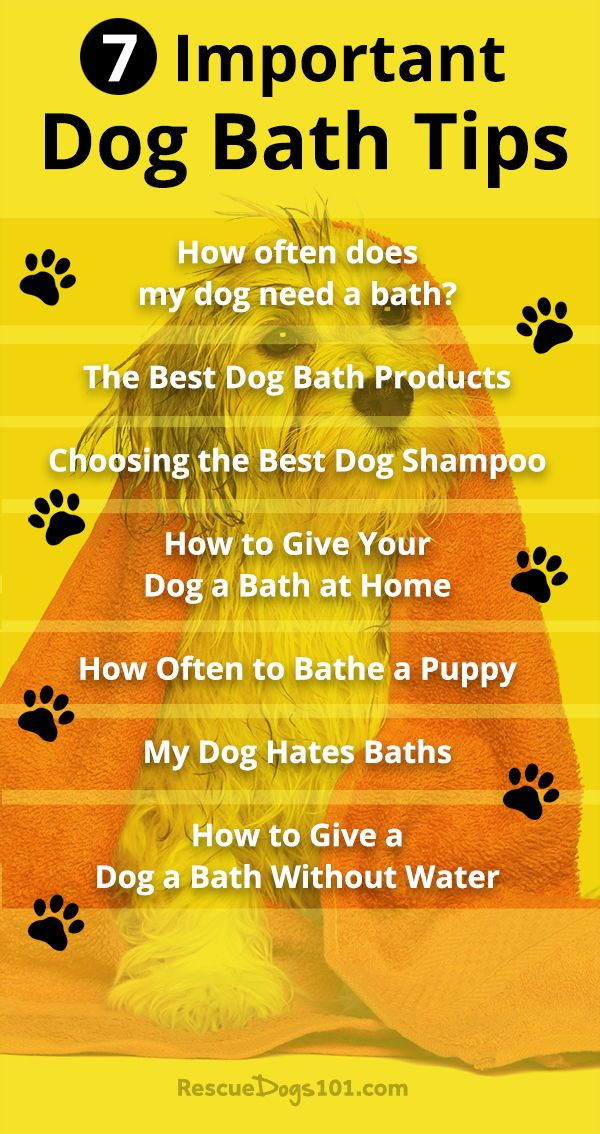 7 Important Dog Bathing Tips Bathing A Puppy Dog Health Tips