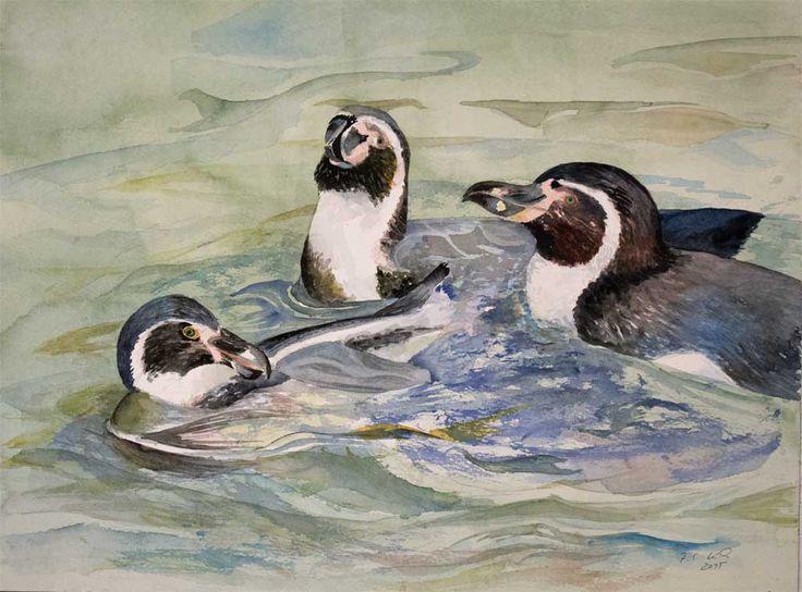 Vorbereitung für unsere Ausstellung im Rostocker Zoo | Wasserballett (c) ein Pinguin Aquarell von Frank Koebsch