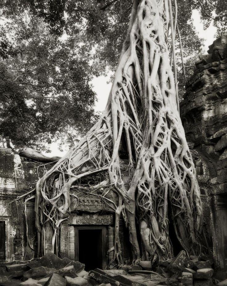 Женщина посвятила жизнь фотографированию самых старых деревьев вмире