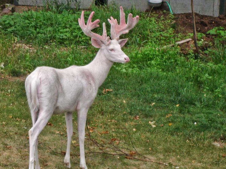 Image result for Albino Animals