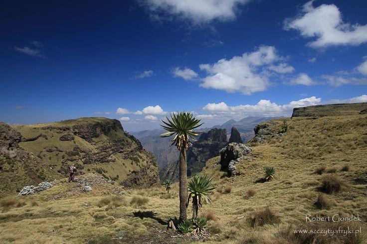 Etiopia - Semien Mountains    www.szczytyafryki.pl    #Etiopia #Semien #Góry