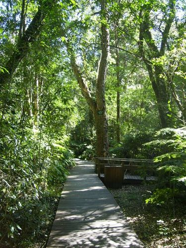 Garden of Eden - Garden Route - Knysna. Do not drive past this experience.....one of my favorite places in South Africa!
