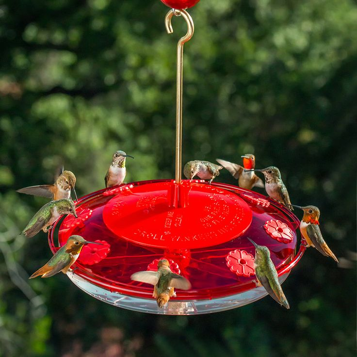 360 best new products from duncraft images on pinterest for Whole coconut bird feeders