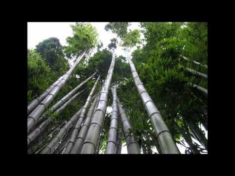 Les Brown  Chinese Bamboo Tree Story