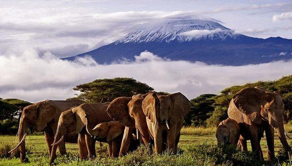 А в Африке, а в Африке — завораживает своей красотой вулкан Гора Килиманджаро в Африке (Танзания).Можно посмотреть самые красивые места на земле на фото, но лучше отправиться в Африку. Чтобы насладиться видом самой высокой точки этого континента – вулканом Килиманджаро. Его высота – 5895 м, ни одна даже самая качественная фотография не передаст тех эмоций, которые можно испытать, находясь в Африке.