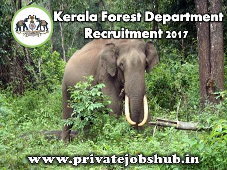 Kerala Forest Department has liberated a recruitment notification titled as Kerala Forest Department Recruitment. Online applications are invited from qualified and interested candidates for filling up Forest Guard Posts.  http://www.privatejobshub.in/2012/07/kerala-forest-department-recruitment.html