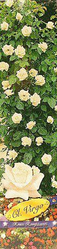 Τριανταφυλλιές - Κατάλογος