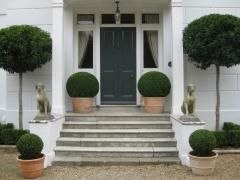 Simple planting of Box for maximum impact on this front doorway