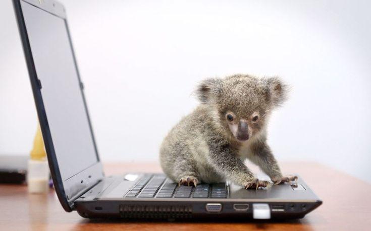 OMG koala!!!