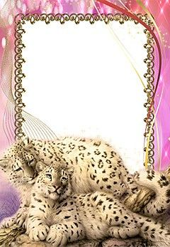 Animales. Marco de foto con leopardos de nieve
