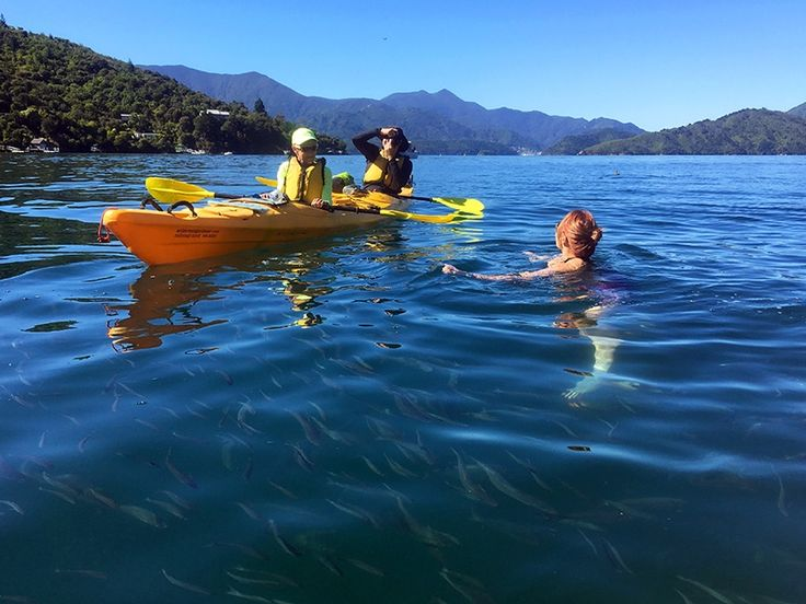 Swimming with the fish in Queen Charlotte Sound, Picton, New Zealand