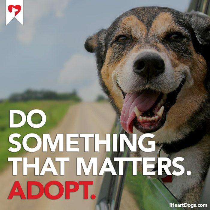 Do something that matters. #adopt http://iheartdogs.com