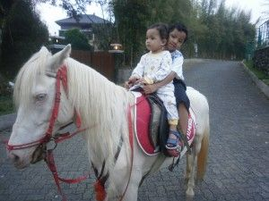 ride a horse with Stephan