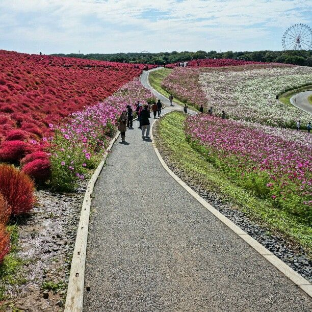 国営ひたち海浜公園 : ひたちなか市, 茨城県