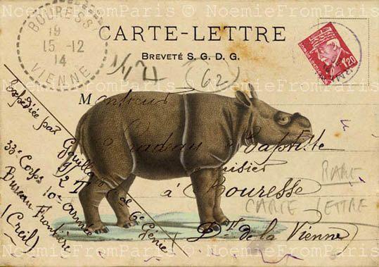 Rhinoceros safari print  Jungle illustration Vintage French Poster collage art print 8x10 via Etsy