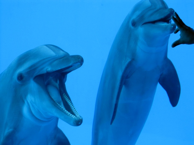 Delfines. Acuario en el puerto de Veracruz, México