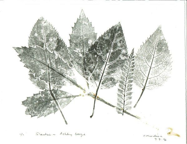 Leaf prints from Glentui Valley, North Canterbury